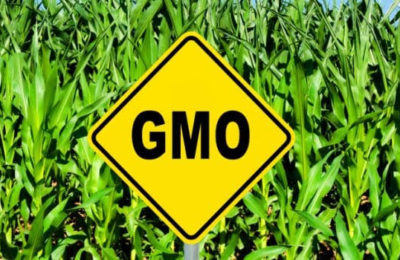 Safety of GM crops : Prof Swaminathan Vs Principal Scientific Adviser | News Analysis